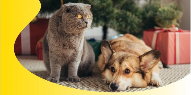 I benefici dell'olio di canapa per cani e gatti