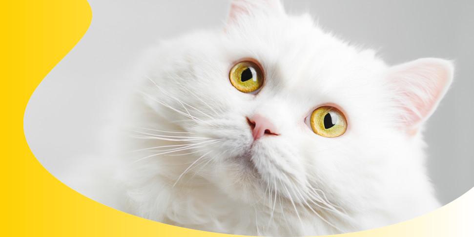 Lo stress nel gatto: come riconoscerlo e curarlo